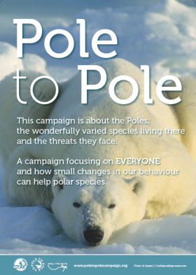 Pole to Pole Poster_Polar bear_280